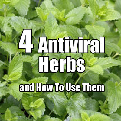 2013-11-18-4-antiviral-herbs-and-how-to-use-them