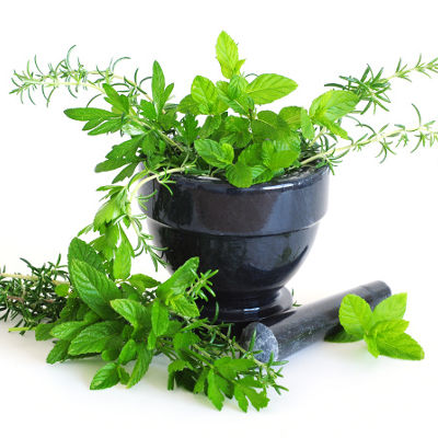 2013-11-20-top-10-herbs-to-boost-immune-system