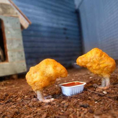 2013-12-02-study-reveals-what-really-makes-up-fast-food-chicken-nuggets