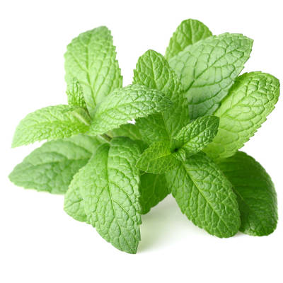 2013-12-26-peppermint-provides-surprising-health-benefits