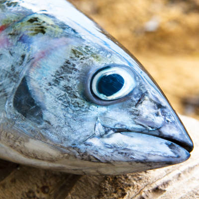 2014-02-17-59-of-the-tuna-americans-eat-is-not-real-tuna
