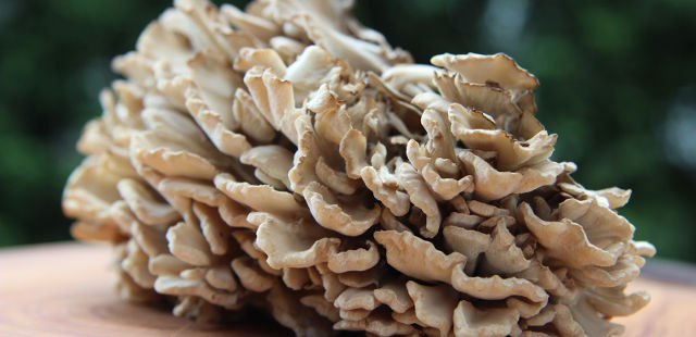 2014-04-10-6-uncommon-superfoods-that-could-help-your-health-status-soar-maitake