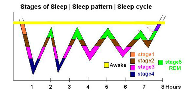 sleep cycle patter