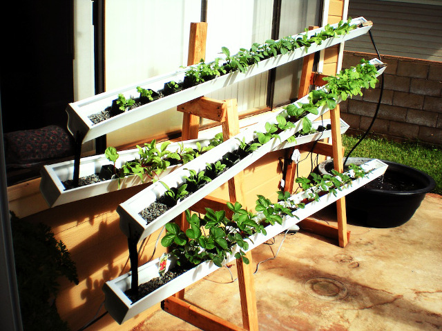 Self-Watering Rain Gutter Garden