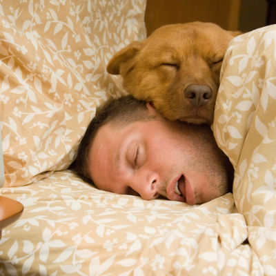 dog sleeping with man