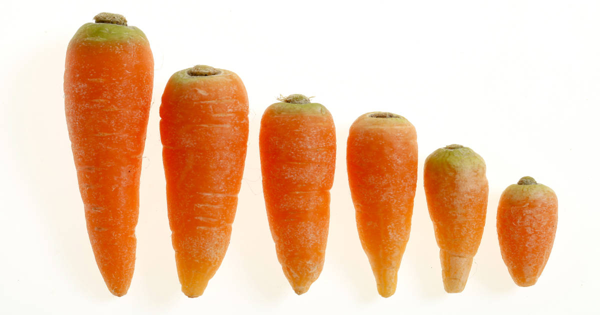 24 Amazing Benefits Of Carrots (Gajar) For Skin And Health recommendations