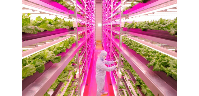 factory farm in japan grows 10,000 heads of lettuce