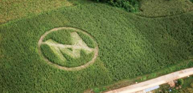 monsanto can sue farmers with over gmo contamination