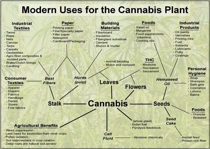 modern uses for cannabis plant