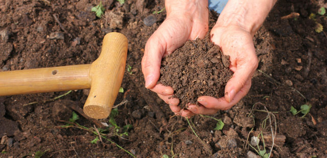 soil depletion and nutrition loss