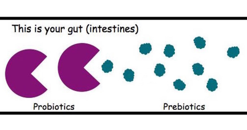 probiotics vs prebiotics