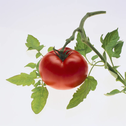 tomato reduce prostate cancer risk
