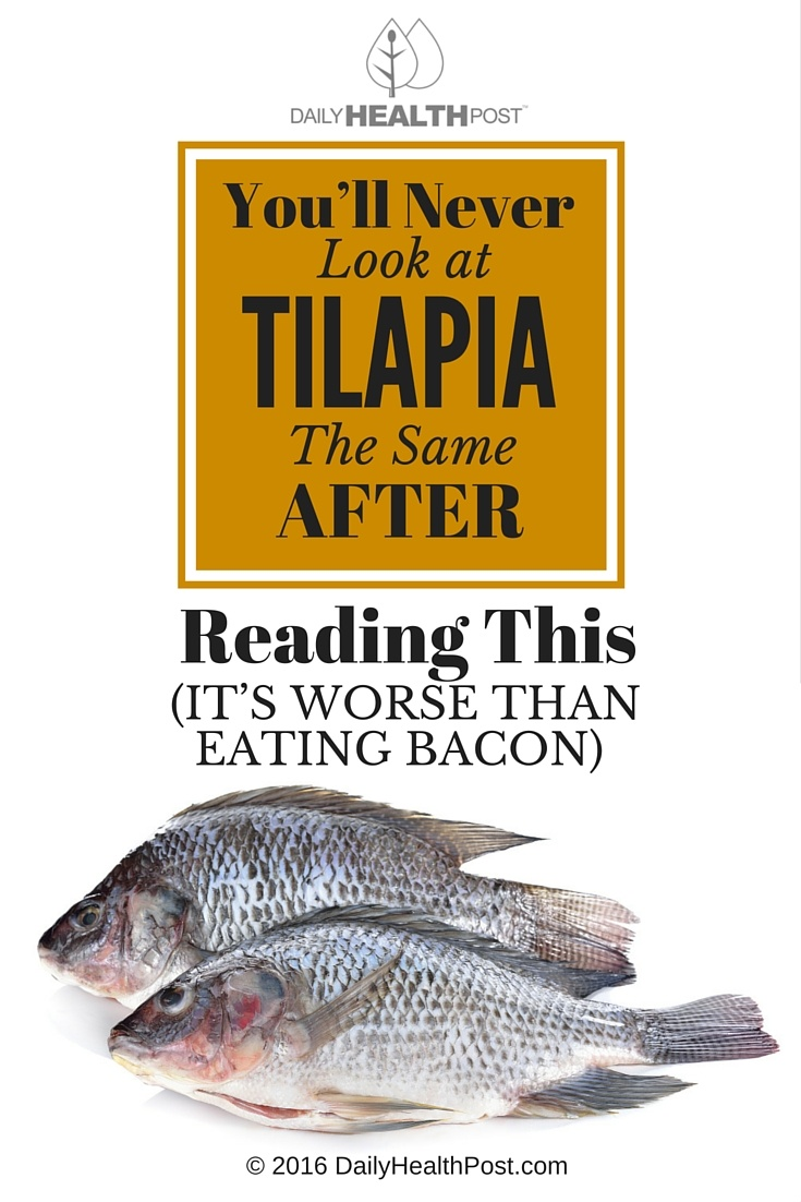 Tilapia worse than bacon