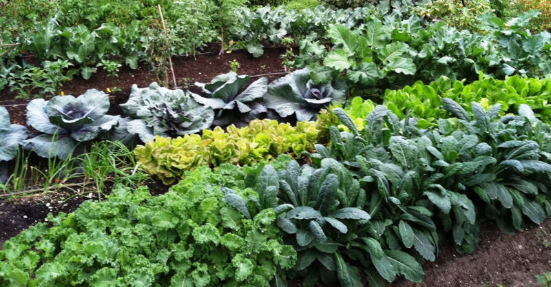 7 Best Ways to Make Your Own Compost to Grow Gigantic Vegetables