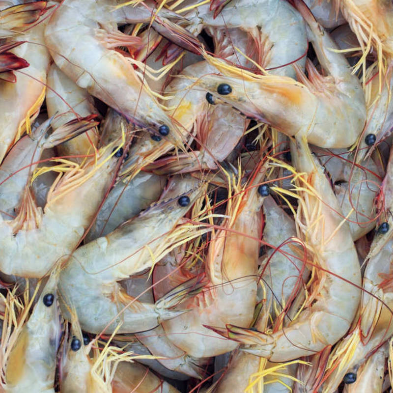 shrimp mislabeled
