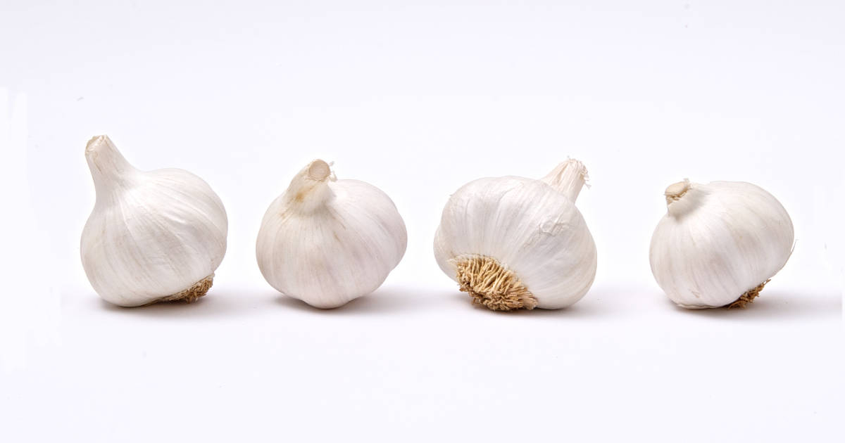 garlic and brain cancer cells