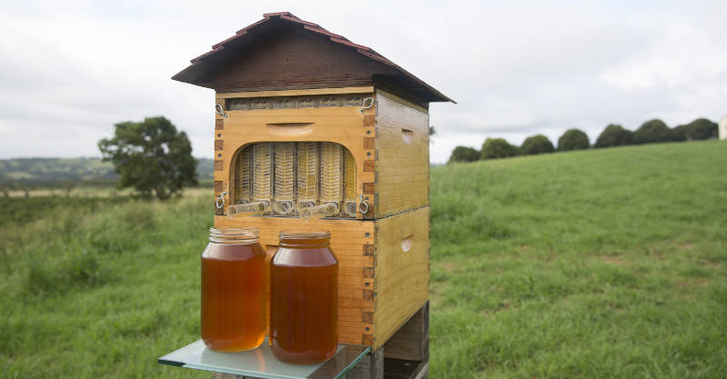 honey tap flow hive