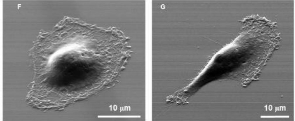 device scan cancer cells