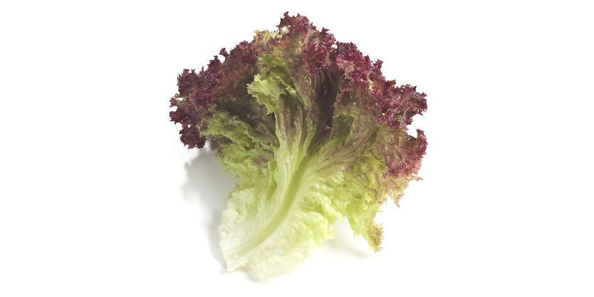 red lettuce leaf