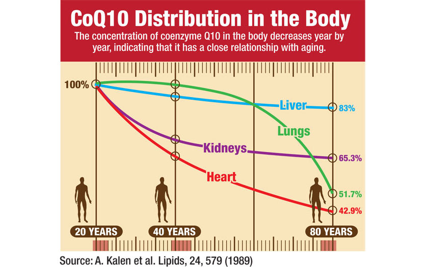 coq10 distribution in body