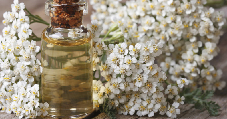 yarrow herb tincture