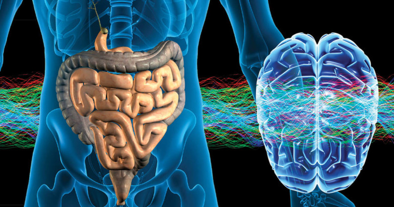 healthy gut and brain