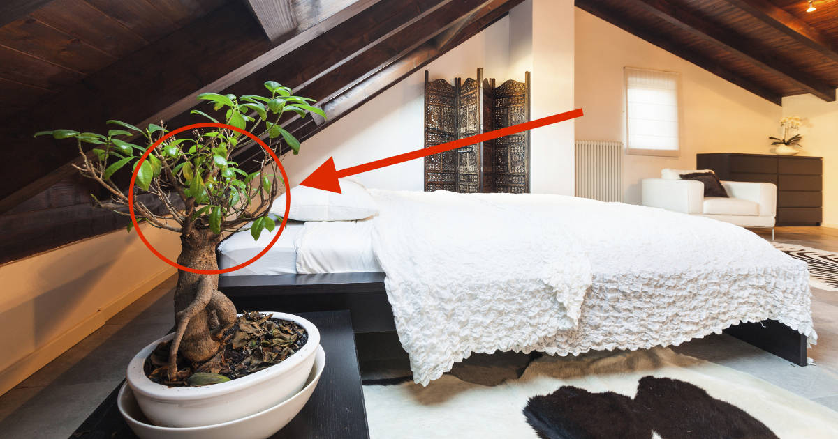Put These 10 Plants Next To Your Bed For Better Sleep