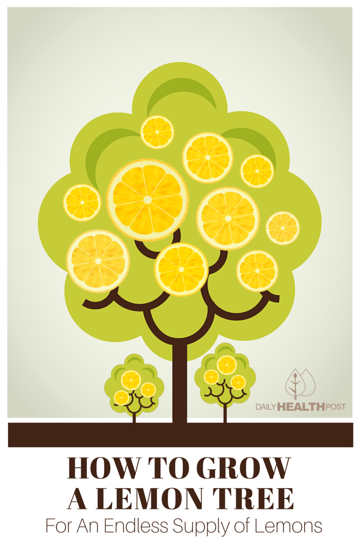How to Grow a Lemon Tree For An Endless Supply of Lemons-PIN
