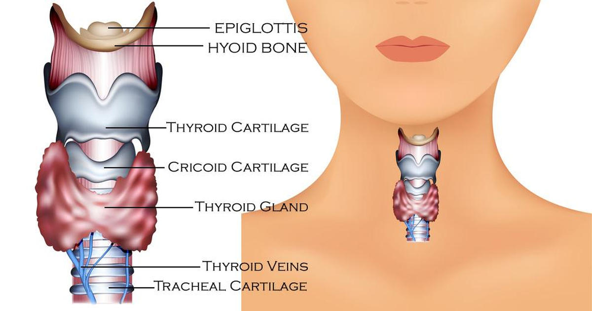 gut and thyroid connection