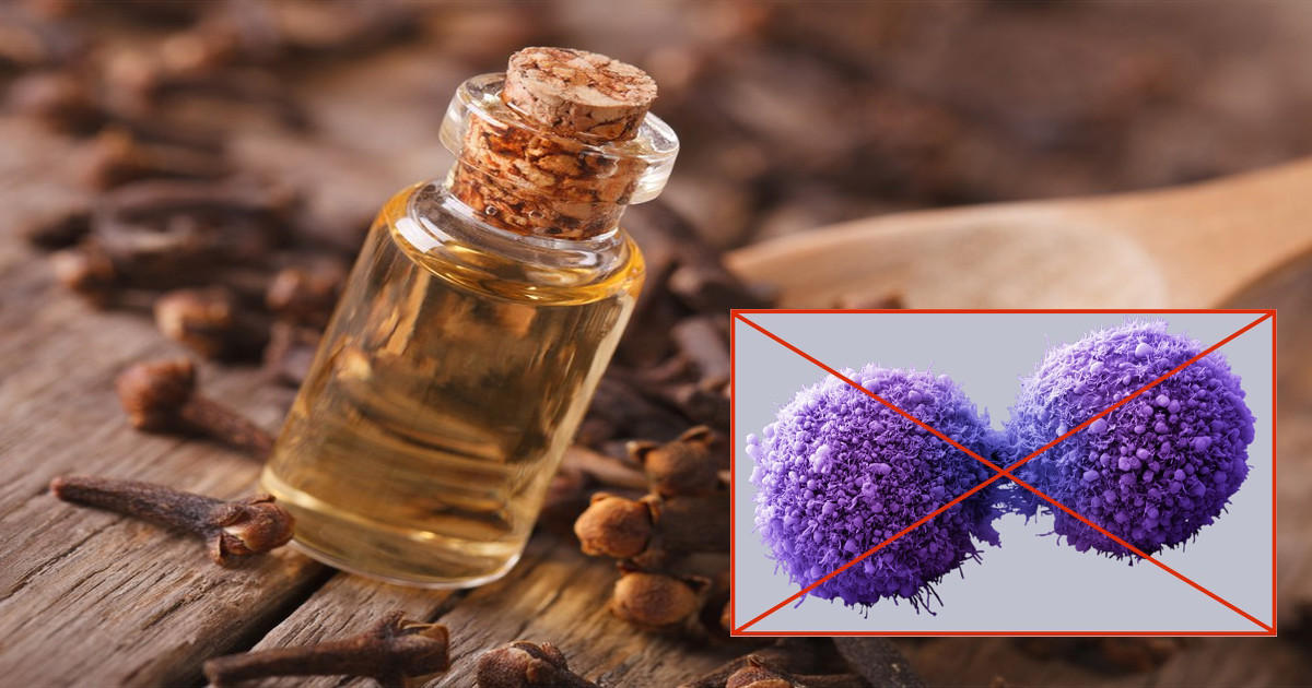 clove extract kills cancer