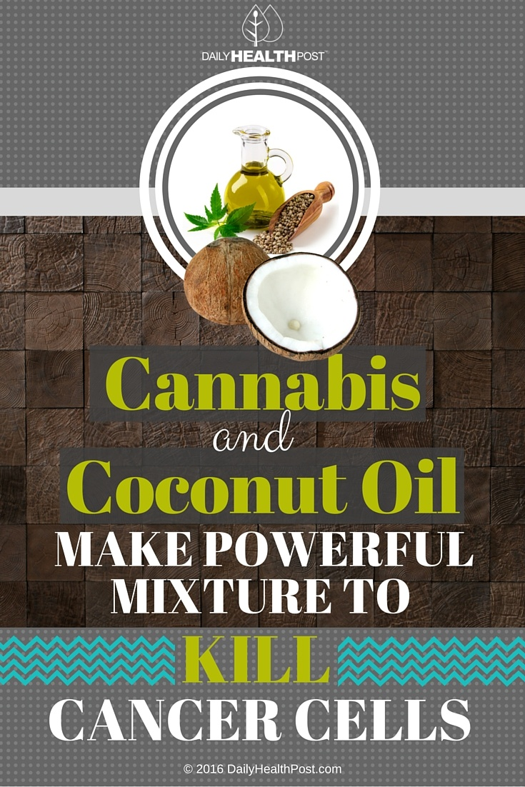 04 Cannabis And Coconut Oil Make Powerful Mixture To Kill Cancer Cells