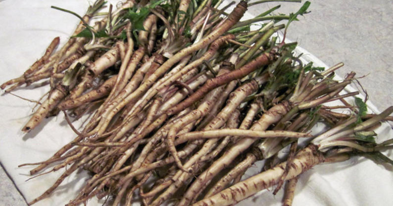 dandelion root kills cancer cells