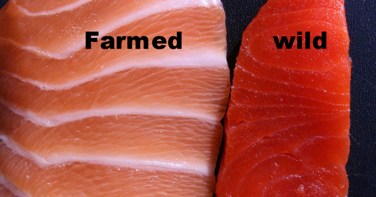 5 Reasons Why Wild Salmon Is Better Than Farmed