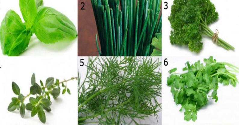 functional and adaptogenic herbs