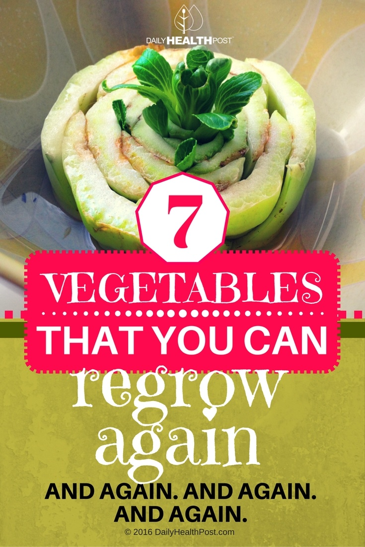 10 7 Vegetables That You Can Regrow Again. And Again. And Again. And Again.
