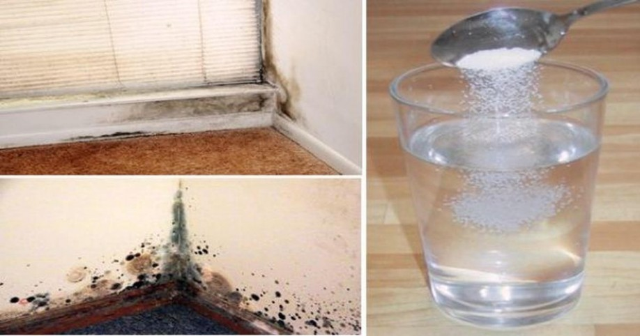 mold remover