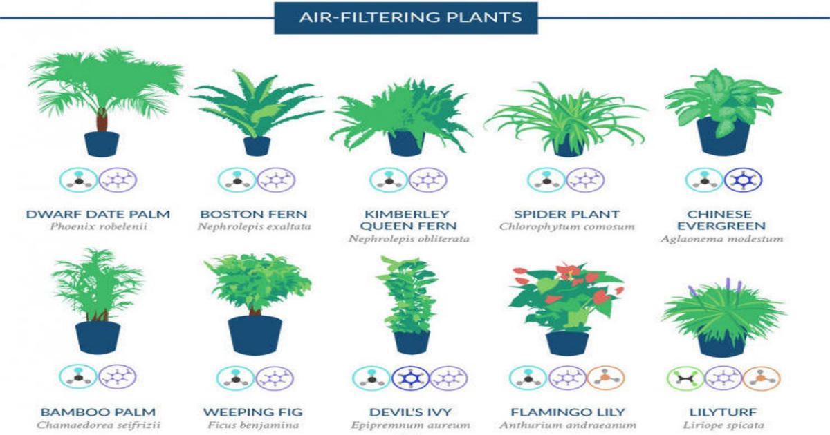 A NASA study explains how to purify air with house plants ...