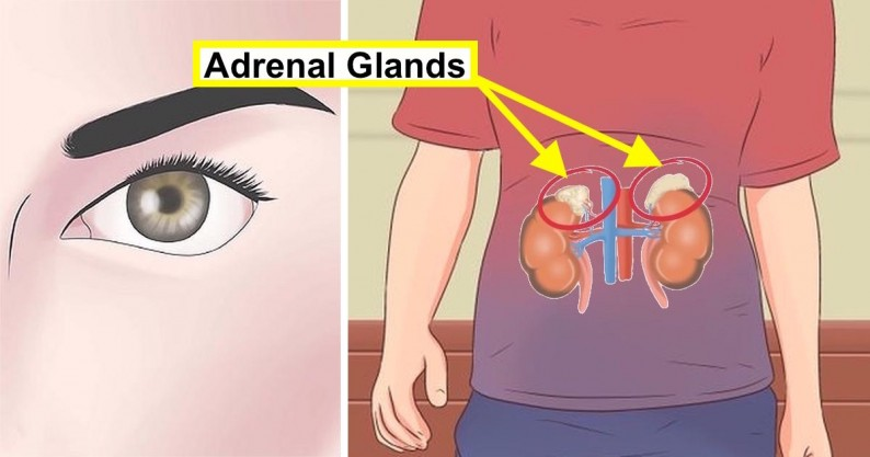 adrenal glands test