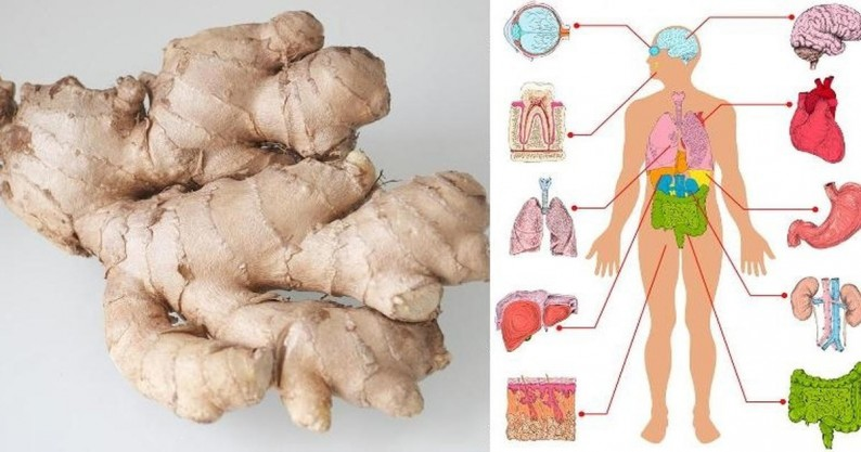 ginger every day