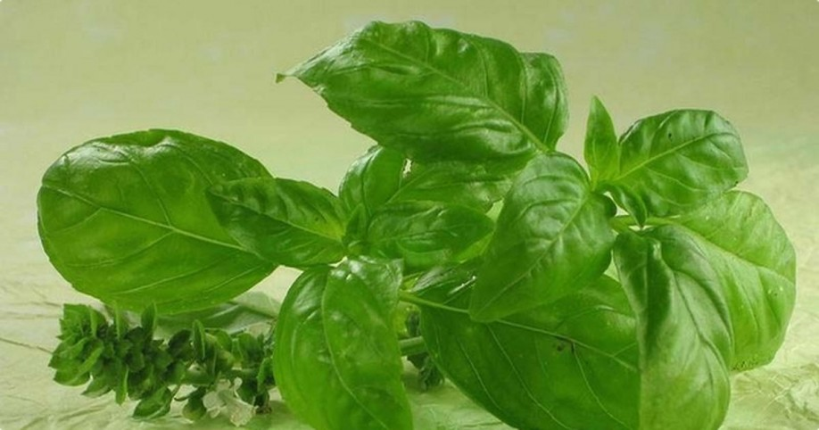basil and cholesterol