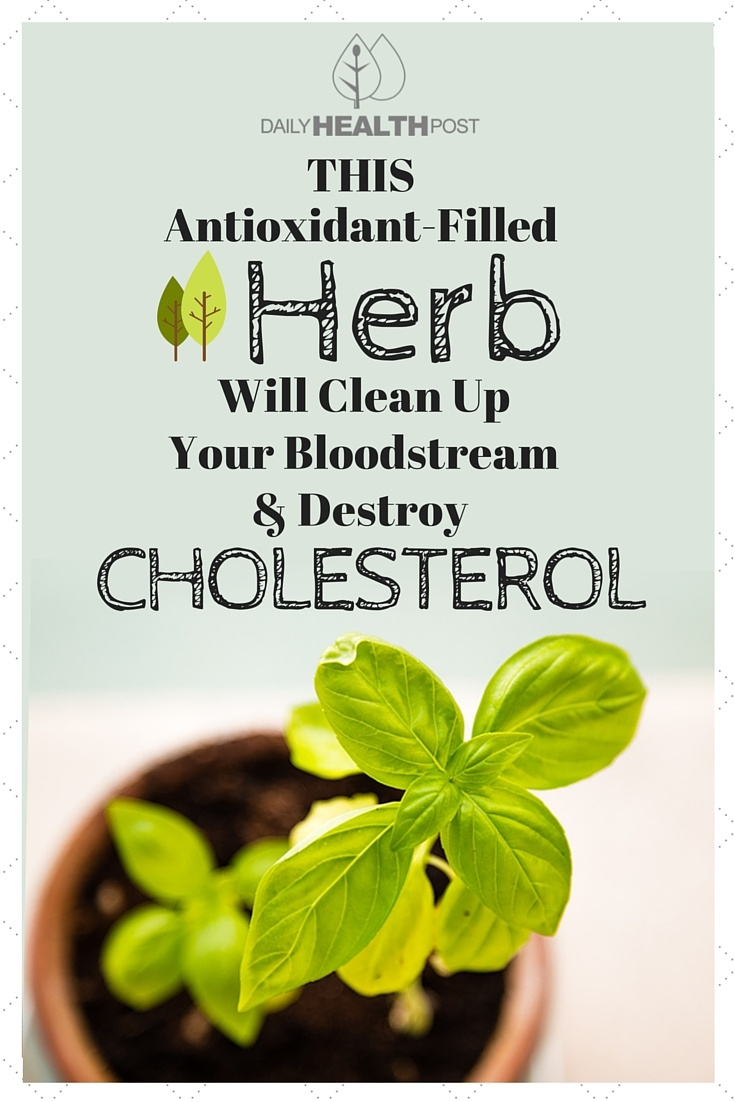 This Antioxidant-Filled Herb Will Clean Up Your Bloodstream And Destroy Cholesterol