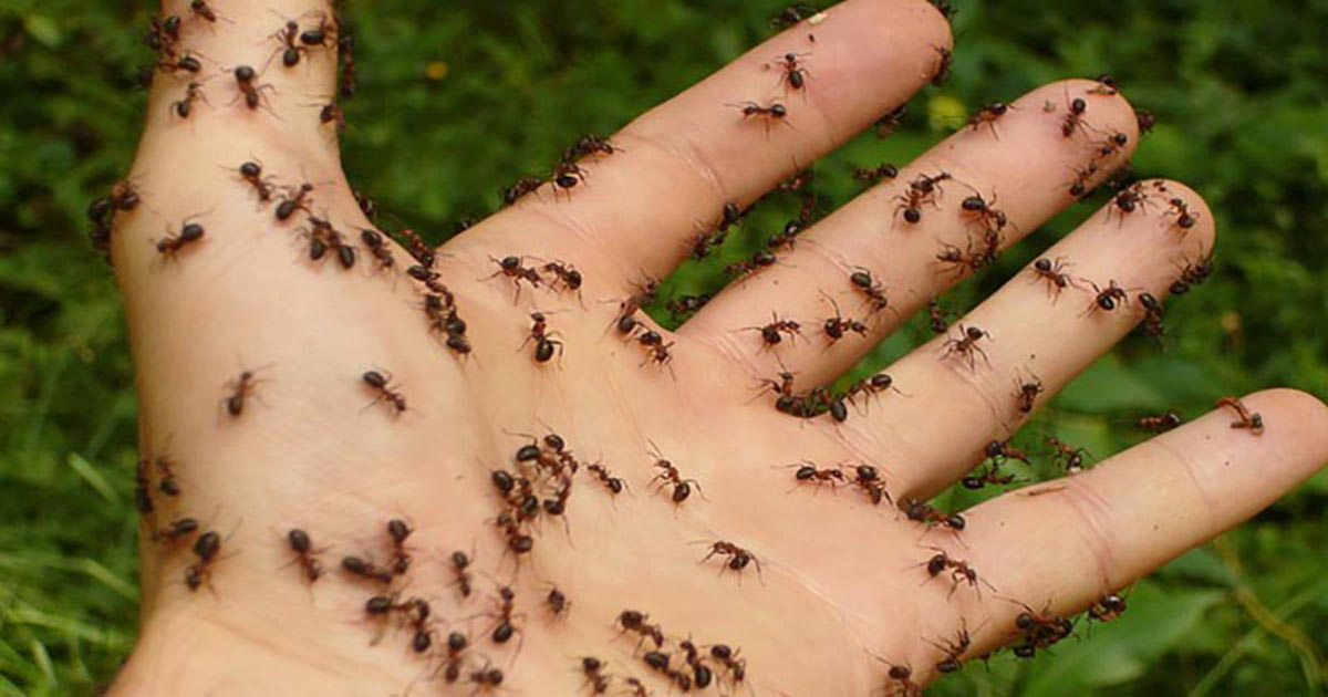 Get Rid Of Ants Fast With These 8 Easy And Natural Solutions-1428