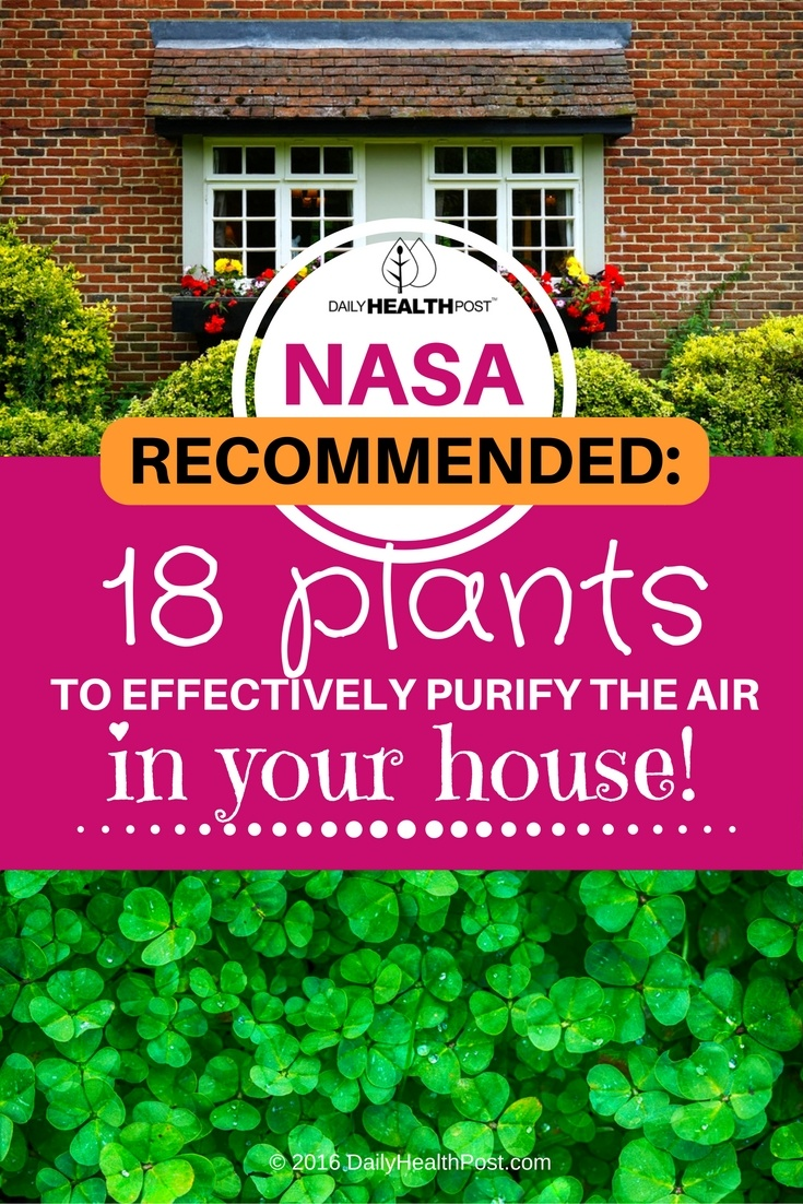 nasa plants to purify air
