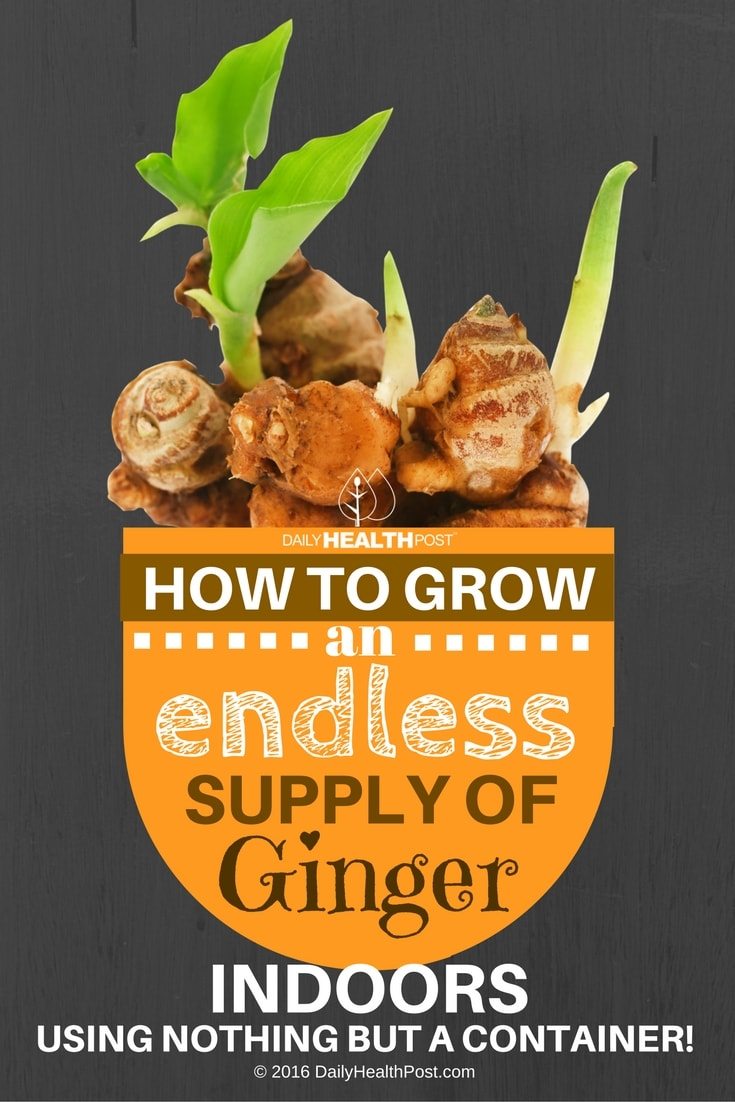 Can I Grow Ginger At Home