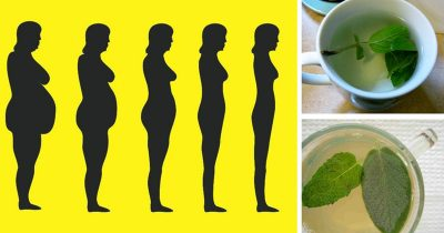 weight loss herbs