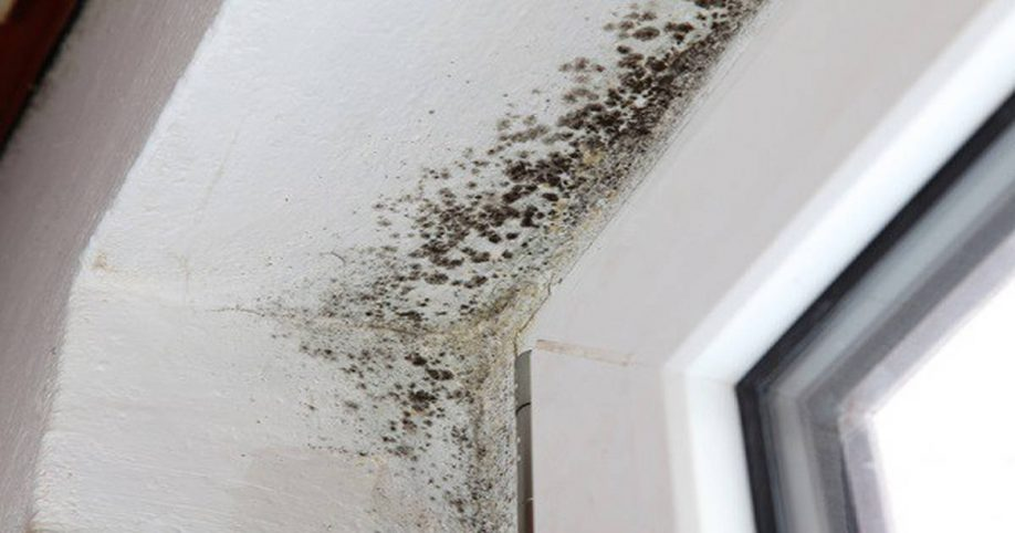 mold removal spray