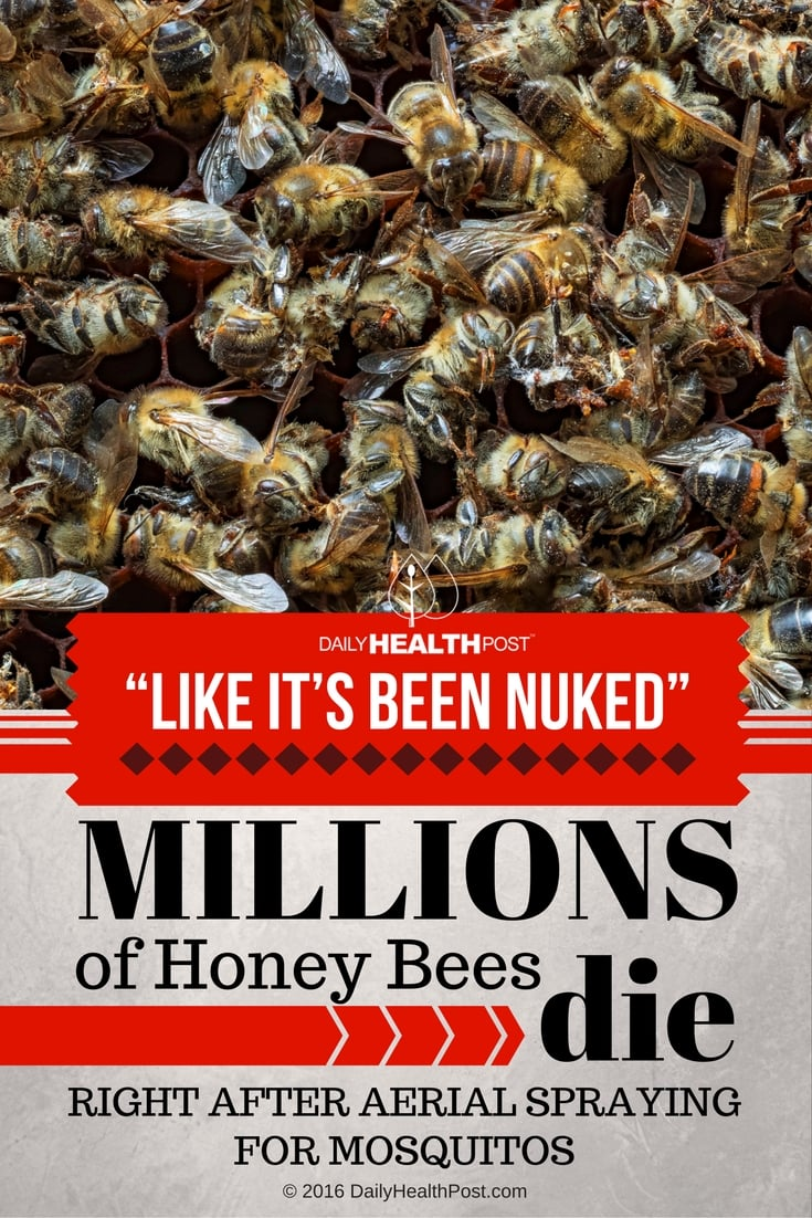 Like-It-Been-Nuked-Millions-of-Honey-Bees-Die-Right-After-Aerial-Spraying