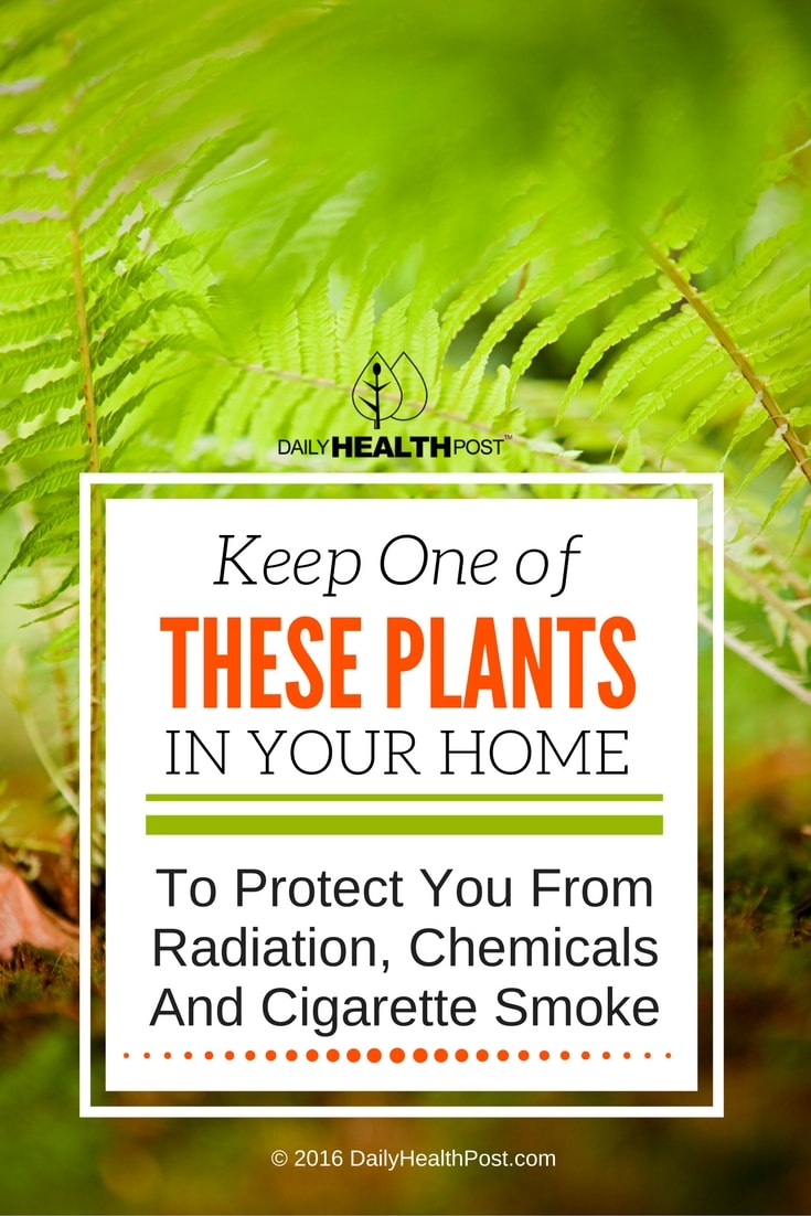0keep-one-of-these-plants-in-your-home-to-protect-you-from-radiation-chemicals-and-cigarette-smoke