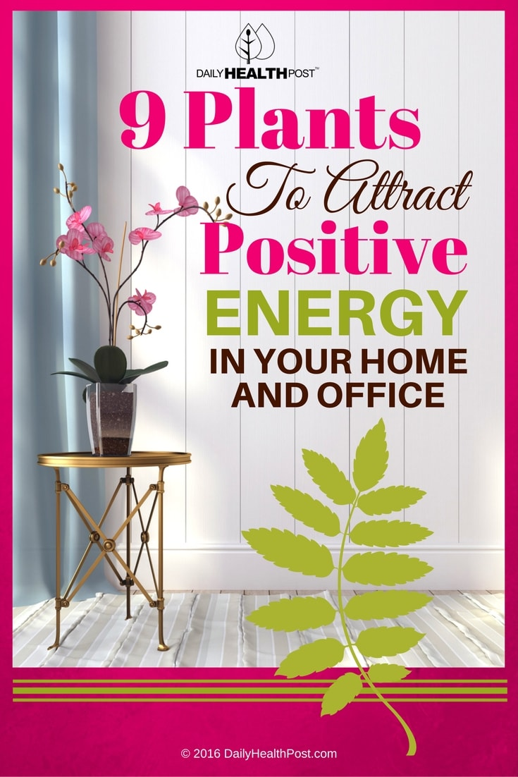 9-plants-to-attract-positive-energy-in-your-home-and-office