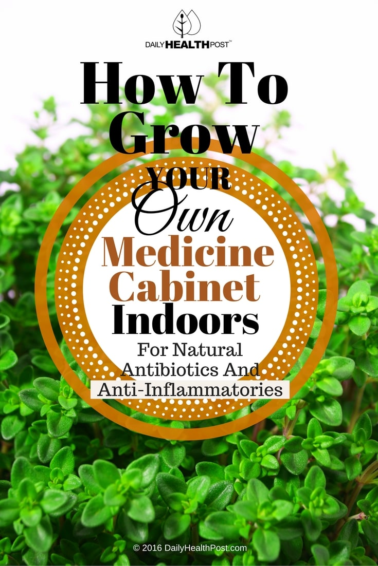 how-to-grow-your-own-medicine-cabinet-indoors-for-natural-antibiotics